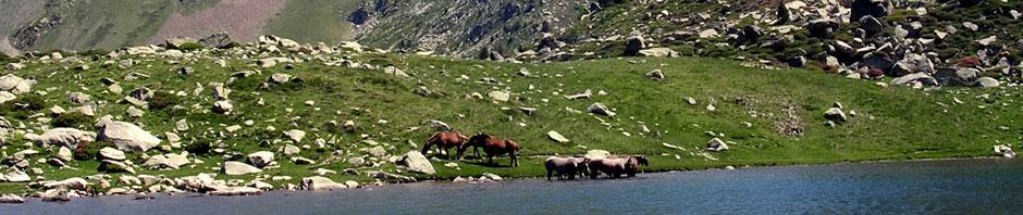 Arcalis horses Lake Tristania